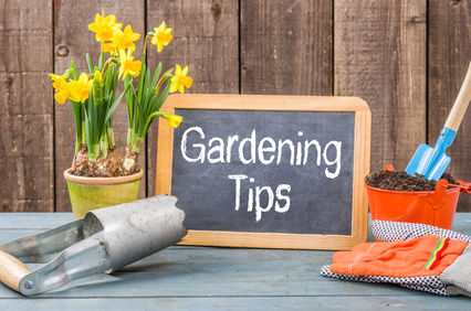 Lovely Spring Gardening Tips