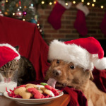 Keeping Your Pet Safe Throughout the Holidays