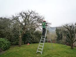 To Prune or Not to Prune, That is Your Question?  By Ron Kuner of Kuner's Fruit Farm