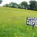 Hey, Hey, it's all about HAY!  By Roger Baker, OFBF State Trustee