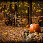 Fall is for Planting  By Tom Dayton