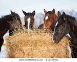 Cold Weather Feeding Tips for Your Equine Partner  by Donna M. Cecil